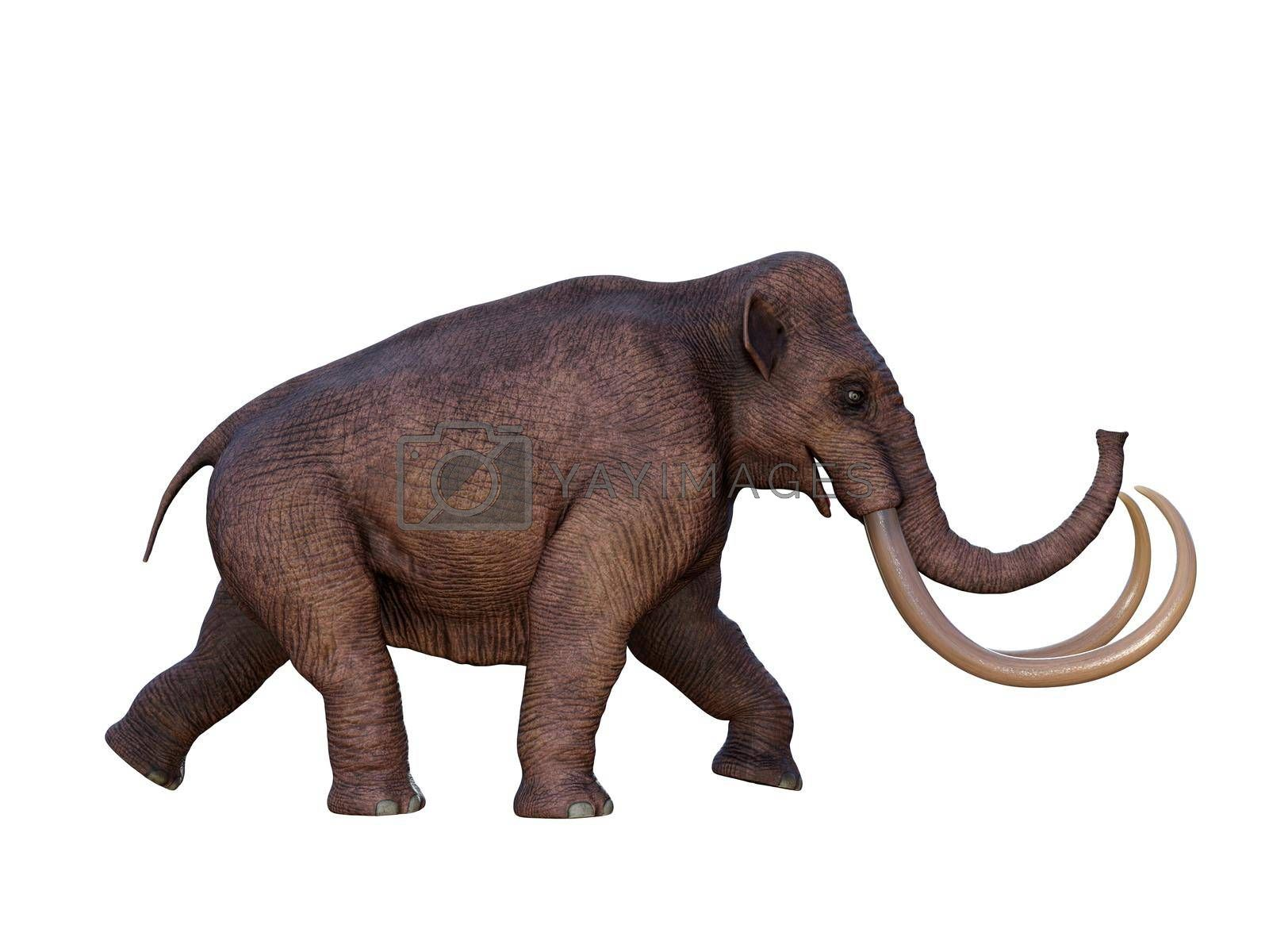 During the Ice Age of North America the Columbian Mammoth was the megafauna of the continent.
