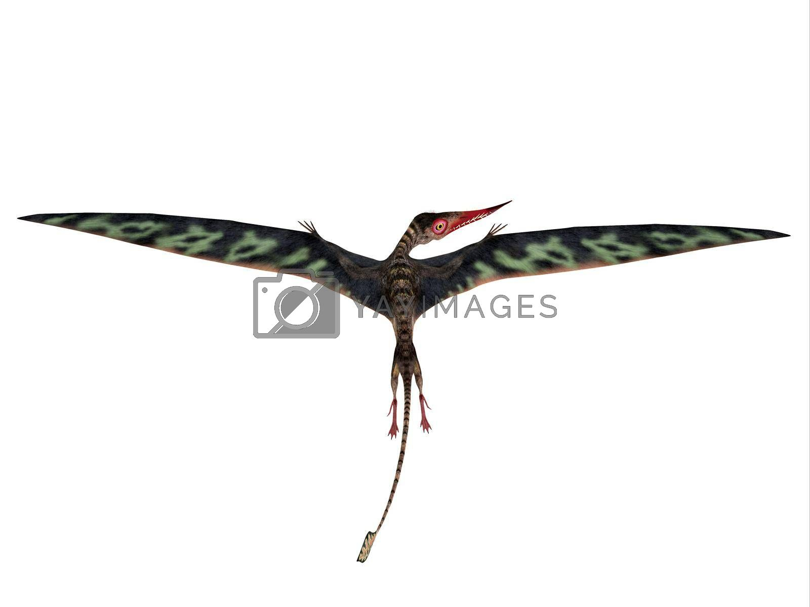 Royalty free image of Rhamphorhynchus Wings Extended by Catmando