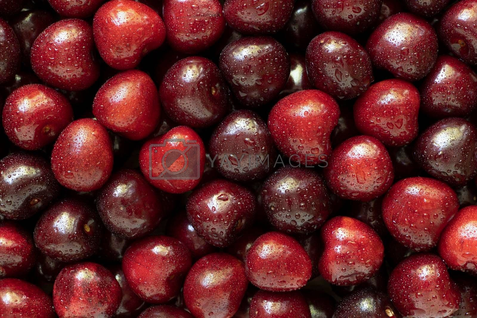 Royalty free image of Sweet cherry with water drops, as background. by phortcach