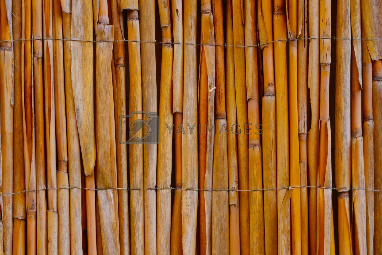 Royalty free image of Close-up on a bamboo fence in the park. Background, texture. by kip02kas