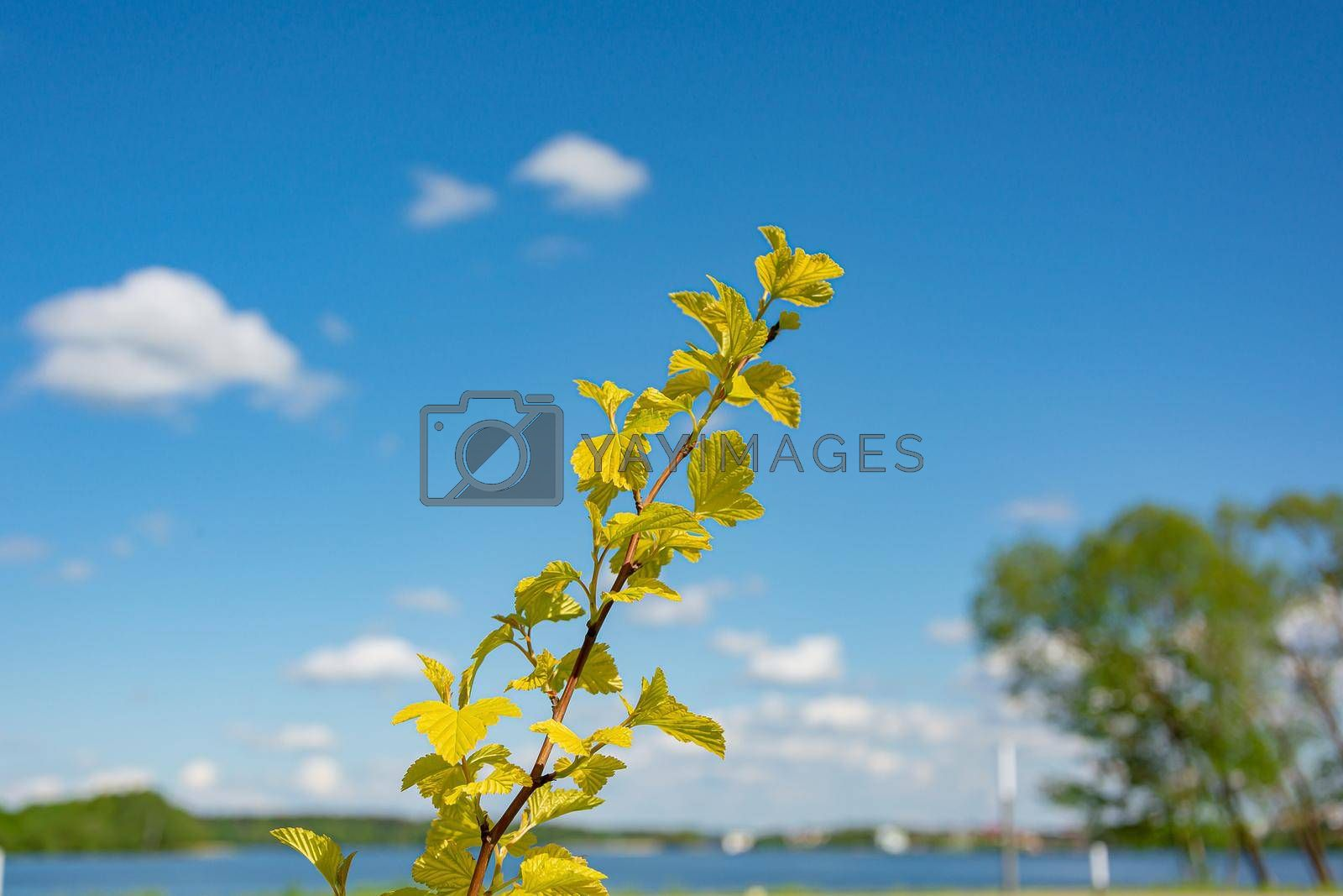Green branch on a blurred background with bokeh elements. Stock photography.