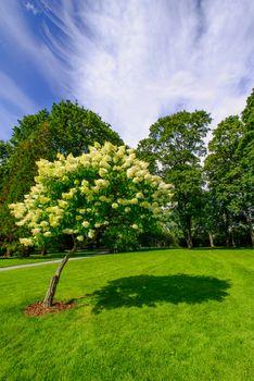 lone blooming tree