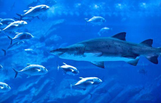 Big natural aquarium