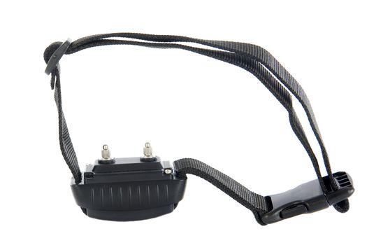 electronic collar
