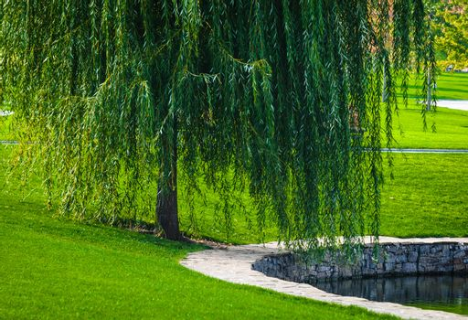 Green willow