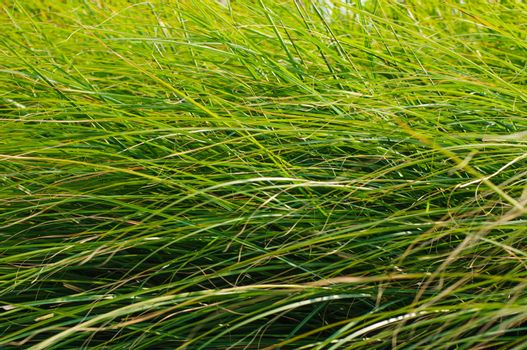 Green grass blades background