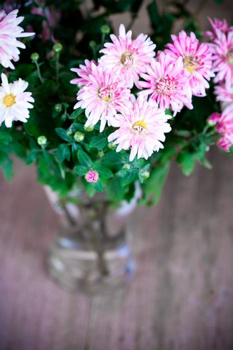 pink chrysanthemum in glass vase