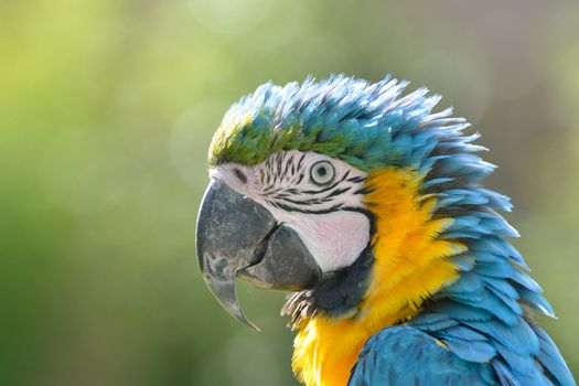 Close up of Parrot Head