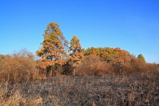 oak wood after strong fire