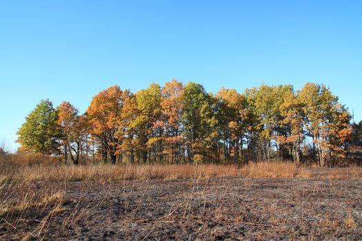 oak wood after fire