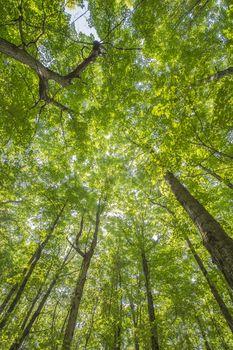 wide angle shot of tree canopy