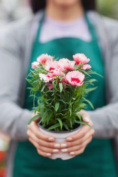 Florist showing a flower