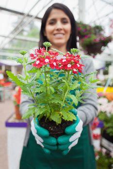 Florist planting a flower