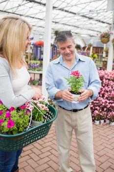 Couple deciding on a plant