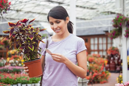 Woman looking for the name of the plant