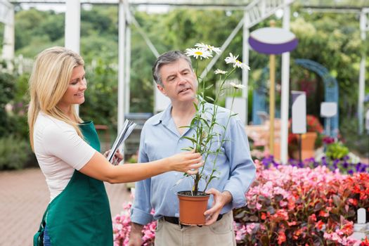 Florist helping the customer