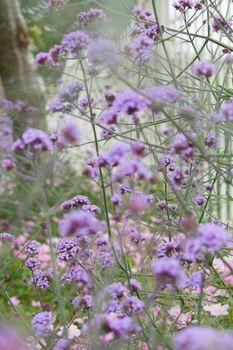 Bush with purple flowers