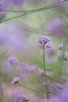 Purple flowering bush