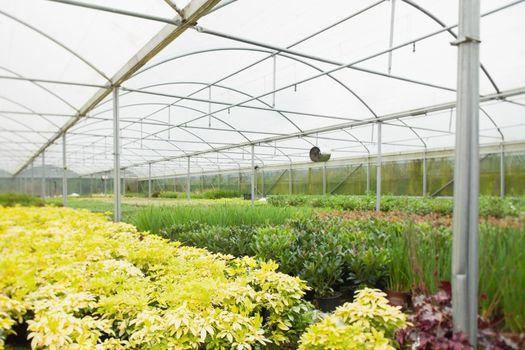 Nursery greenhouse