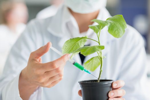 Woman injecting plant stalk with green chemical