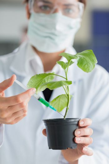 Woman holding a plant while injecting stalk