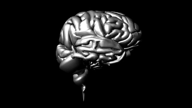 highly detailed animation of a human brain