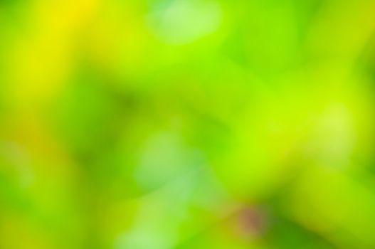 Defocus of greenleaf