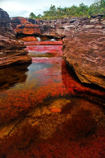Cano Cristales, also known as the seven colored river, in Meta, Colombia.