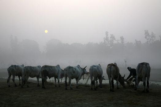 Misty morning in the Bengal countryside Kumrokhali