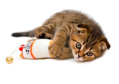 Little playful kitten
