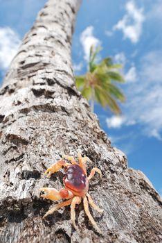 Crab on palm