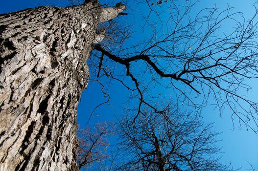 Under Oak Tree
