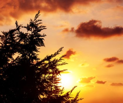 Silhouette of tree over sunset