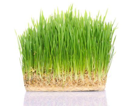 Grass in soil