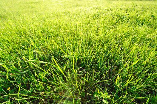 Meadow in sunlight