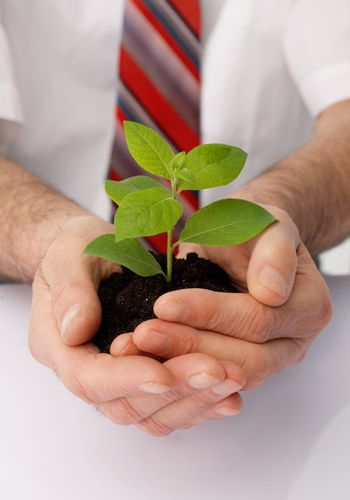 Close-up of a businessman's hands cup a green plant.