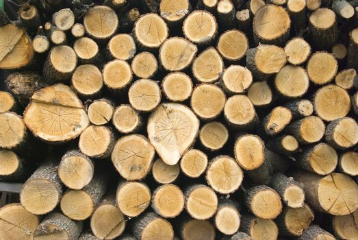 stacked timber