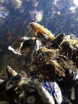 Shells underwater