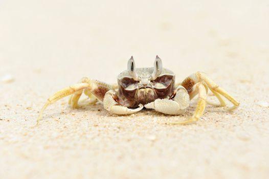 Crab on a beach