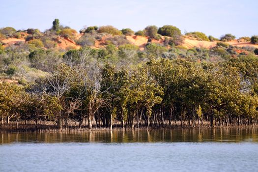 Outback Ocean Mangroves, near Redbanks at the top of Spencer Gul