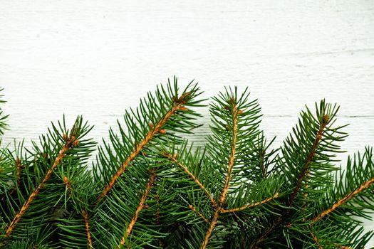 fir tree on white wooden board