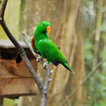 Parrot bird