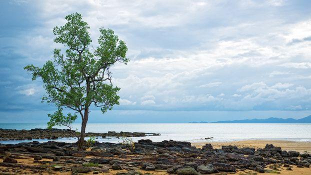 Single tree growing on the boulders near the sea