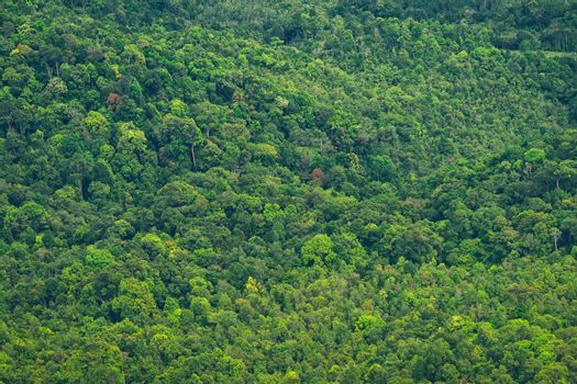 Background of the vibrant rainforest trees