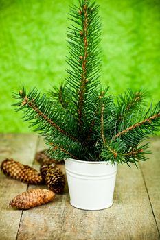 christmas fir tree and pinecones