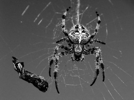 Spider and his cactch
