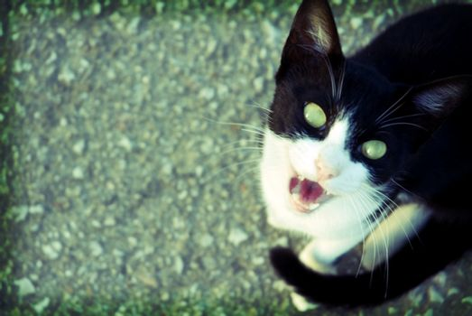 paranormal background cat, halloween