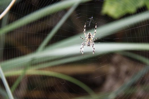 spider sitting in the middle of its web waiting for prey