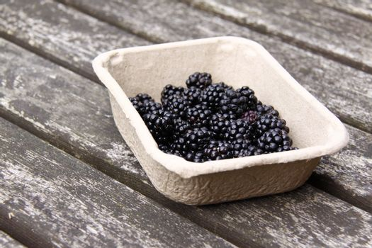 blackberries freshly picked and in a cardboard dish