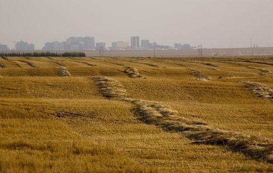 Harvest Swathes
